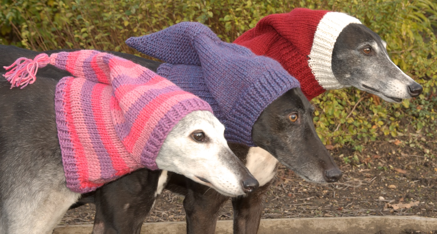Sighthound pixie hats by u neek creations action for greyhounds uk sighthound bankloansurffo Images