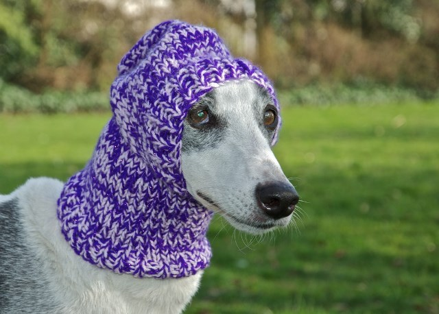 Sighthound Balaclava (By U-NeeK creations)   Action for Greyhounds UK