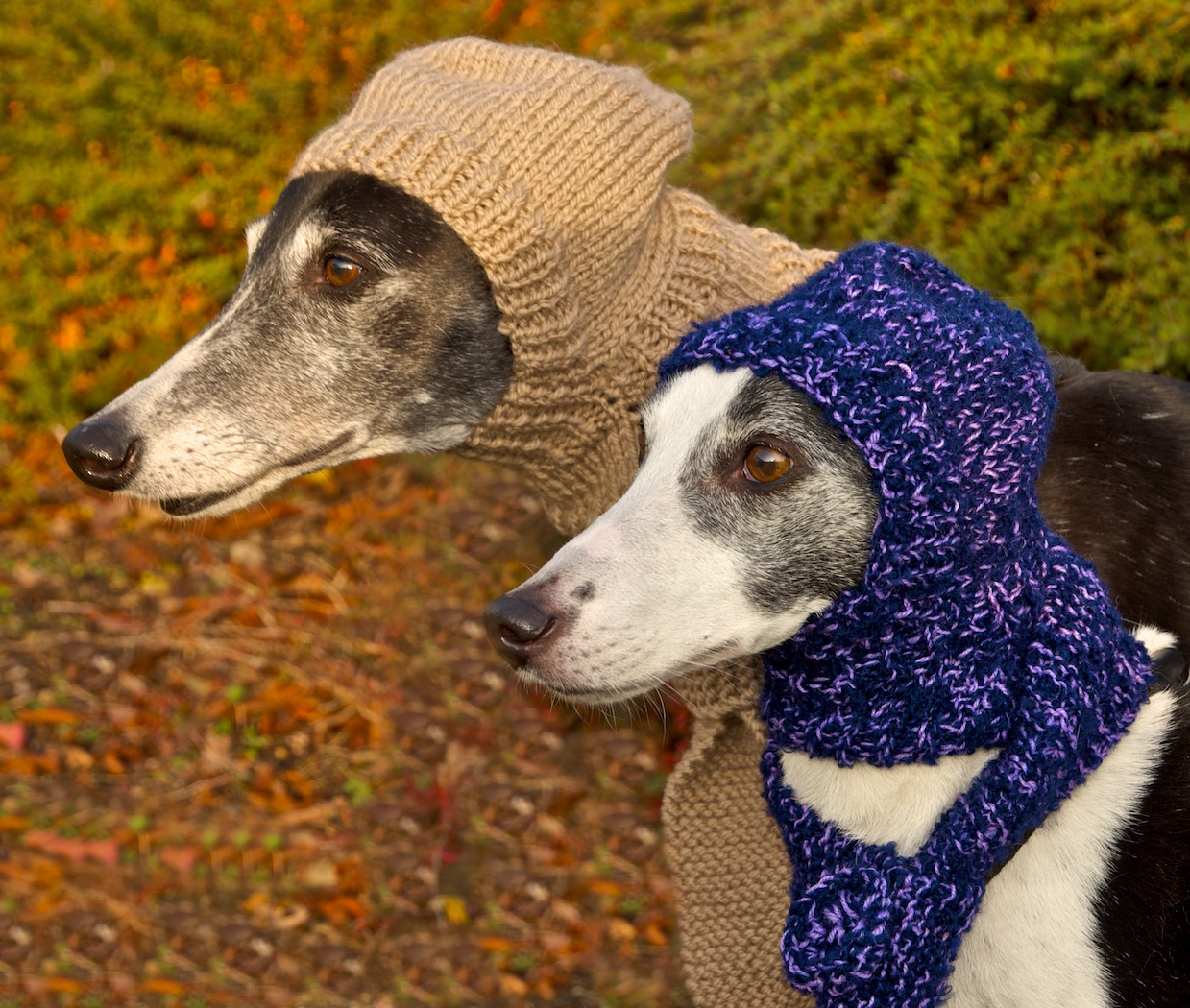 Balaclavas sizes suitable for greyhounds,medium sighthounds and whippets